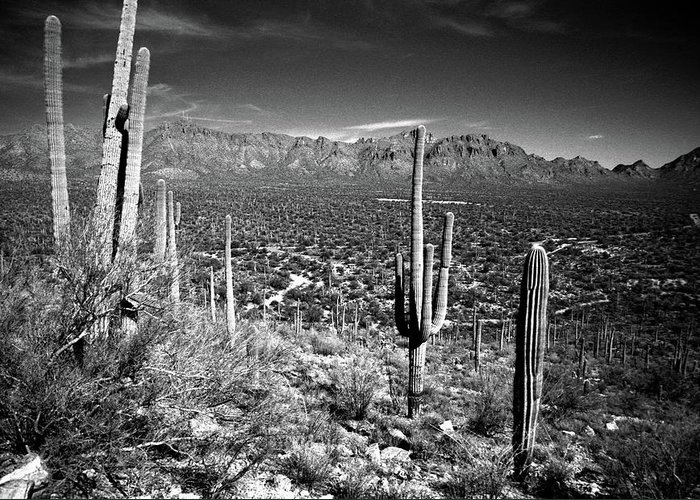 Saguaro Cactus Greeting Card featuring the photograph Arizona, Tucson, Saguaro Np, Brown by James Denk