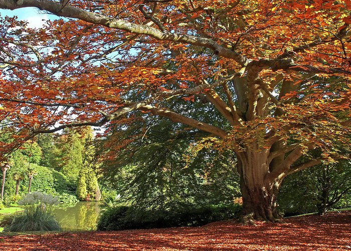 Autumn Leaves Greeting Card featuring the photograph Autumn Glow by Gill Billington