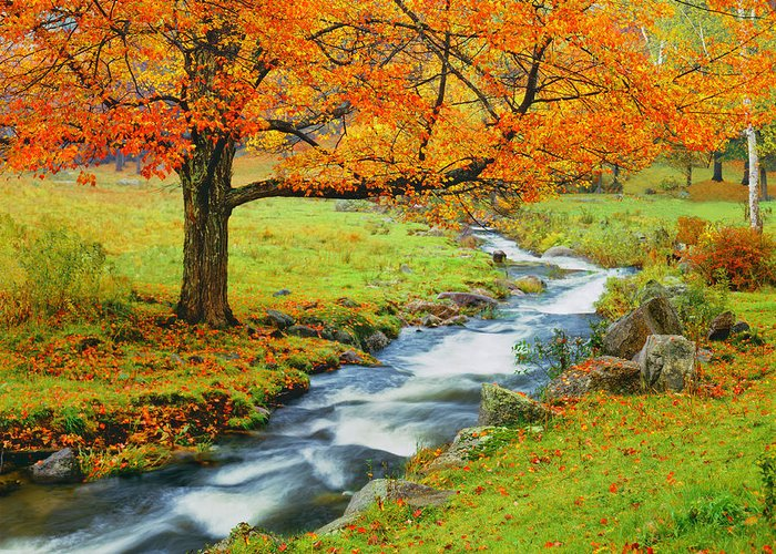 Scenics Greeting Card featuring the photograph Autumn In Vermont G by Ron thomas