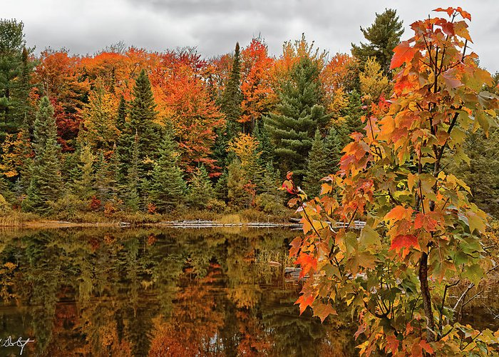 Algonquin Provincial Park Greeting Card featuring the photograph Autumn Reflections by Phill Doherty