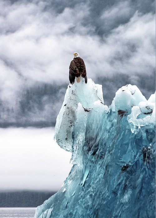 Iceberg Greeting Card featuring the photograph Bald Eagle On The Glacier by Naphat Photography