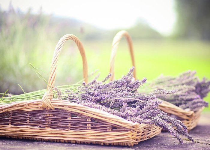 Dorset Greeting Card featuring the photograph Baskets Of Lavender by Sasha Bell