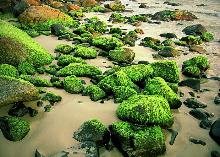 Tranquility Greeting Card featuring the photograph Beach Rocks Covered With Seaweed by Andre Bernardo