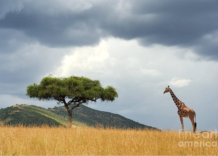 Safari Greeting Card featuring the photograph Beautiful Landscape With Nobody Tree by Volodymyr Burdiak