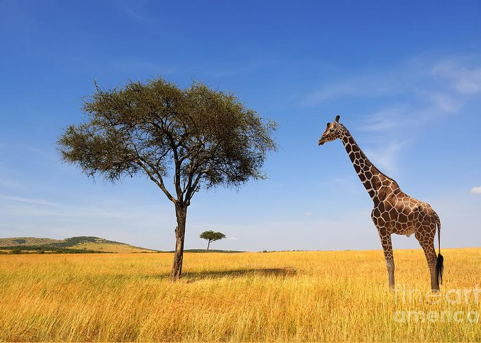 Safari Greeting Card featuring the photograph Beautiful Landscape With Tree And by Volodymyr Burdiak