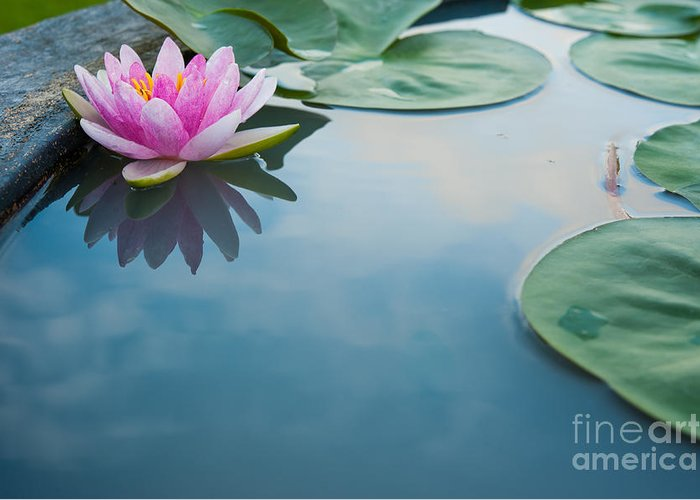 Pond Greeting Card featuring the photograph Beautiful Pink Lotus, Water Plant With by Vasin Lee