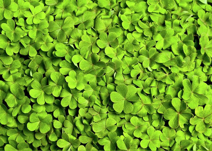Leaf Greeting Card featuring the photograph Bed Of Clover by Kledge