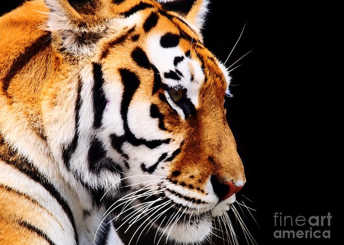 Siberian Tiger Greeting Cards