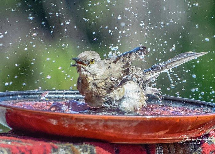 Mockingbird Greeting Card featuring the photograph Bird In A Bath by Dawn Hough Sebaugh