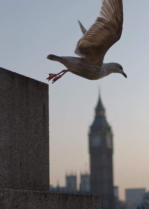 Clock Tower Greeting Card featuring the photograph Bird Takeoff by Photograph © Jon Cartwright
