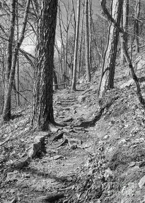 Black And White Greeting Card featuring the photograph Black And White Mountain Trail by Phil Perkins