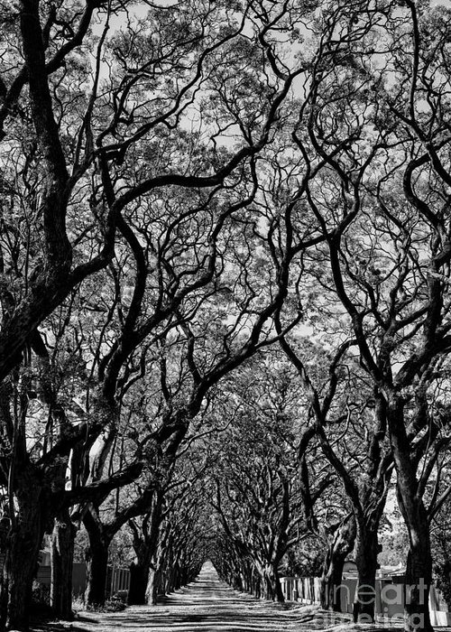 Big Greeting Card featuring the photograph Black And White Of Lane With Trees by Dina Van Wyk
