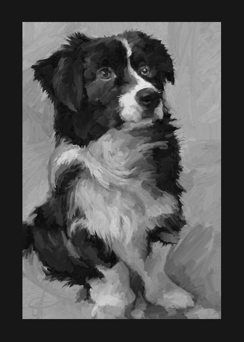 Border Greeting Card featuring the painting Black and White Pup by Scott Waters