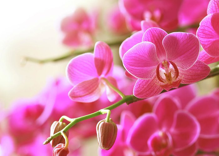 Environmental Conservation Greeting Card featuring the photograph Blooming Pink Orchid On A Green Branch by Dreaming2004