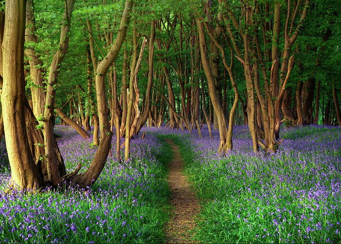 Tranquility Greeting Card featuring the photograph Bluebells In Sussex by Photography By Sam C Moore