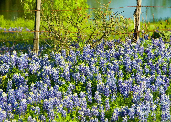 Season Greeting Card featuring the photograph Bluebonnets, Texas by Donovan Reese
