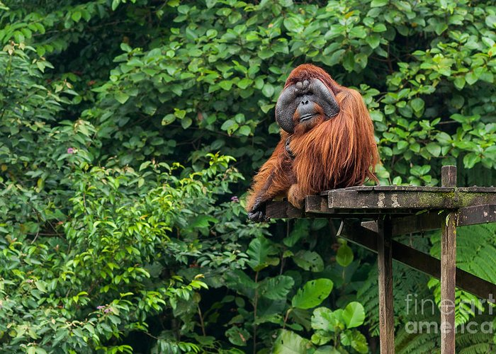 Monkey Greeting Card featuring the photograph Borneo, Malaysia - September 6, 2014 by Nomads.team