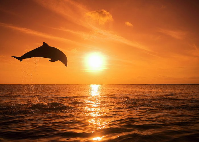 Orange Color Greeting Card featuring the photograph Bottlenose Dolphin Tursiops Truncatus by Rene Frederick
