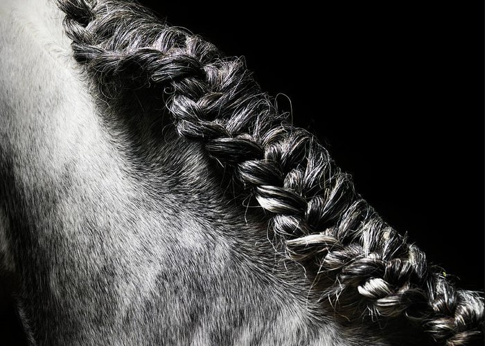 Horse Greeting Card featuring the photograph Braided Mane Of Grey Horse by Henrik Sorensen