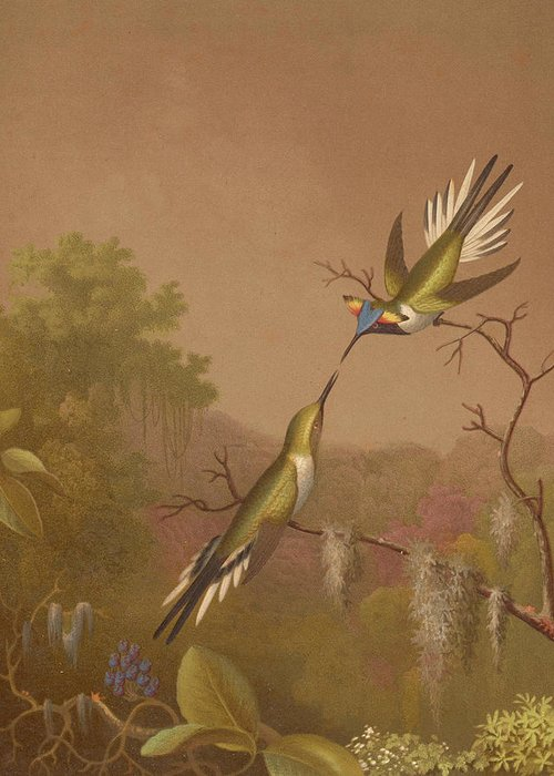 Brazilian Hummingbirds Greeting Card featuring the painting Brazilian Hummingbirds II by Martin Johnson Heade
