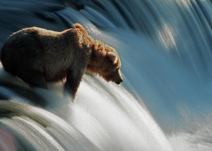 Poetry- Literature Greeting Card featuring the photograph Brown Bear At Brooks Falls by Mark Newman