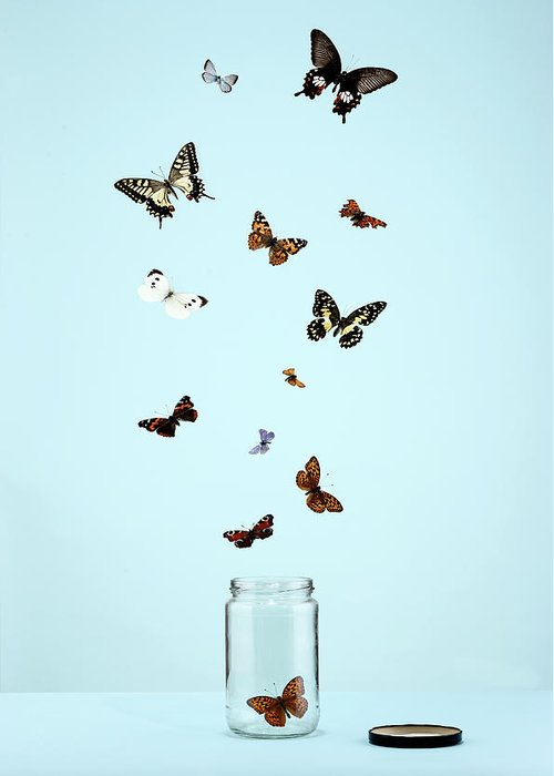 Animal Themes Greeting Card featuring the photograph Butterflies Escaping From Jar by Martin Poole