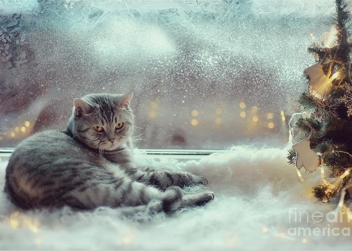 Pets Greeting Card featuring the photograph Cat In The Winter Window by Alekuwka