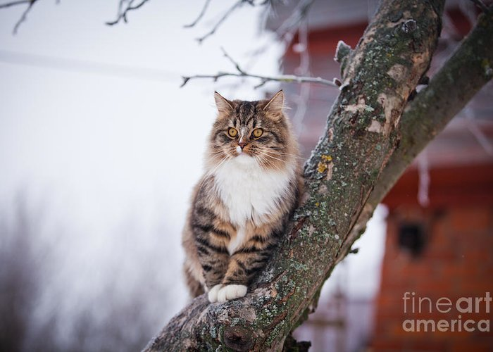Play Greeting Card featuring the photograph Cat Outdoors In The Winter Is On The by Dezy