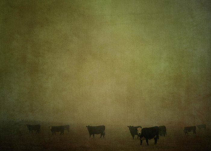 Pets Greeting Card featuring the photograph Cattle In The Mist by Jill Ferry