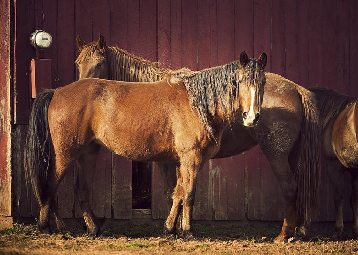 Horse Greeting Card featuring the photograph Chestnut Horses by Thepalmer