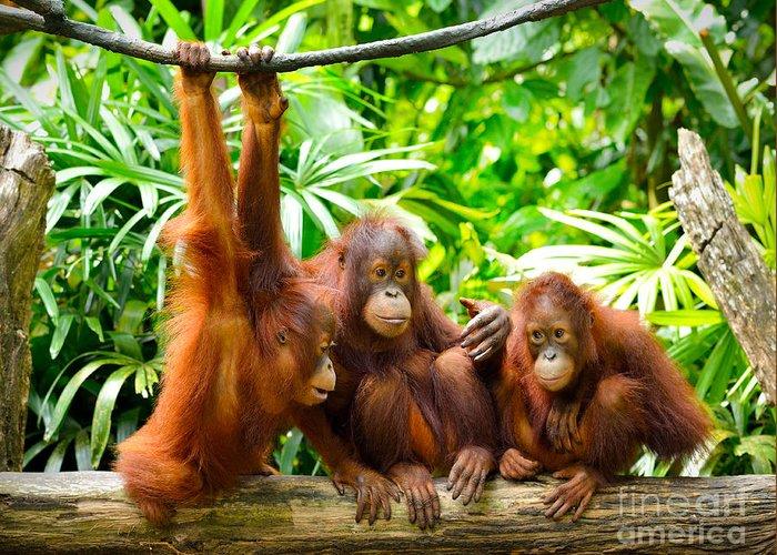 Fur Greeting Card featuring the photograph Close Up Of Orangutans Selective Focus by Tristan Tan