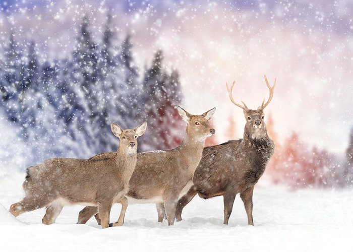 Deer Greeting Card featuring the photograph Close Young Deer In Nature. Winter Time by Volodymyr Burdiak
