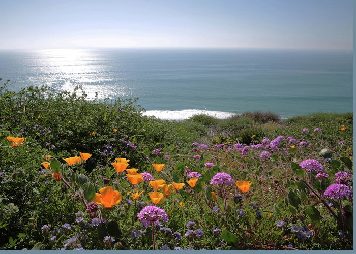 Wildflowers Greeting Card featuring the photograph Coastal Bouquet by Robin Street-Morris