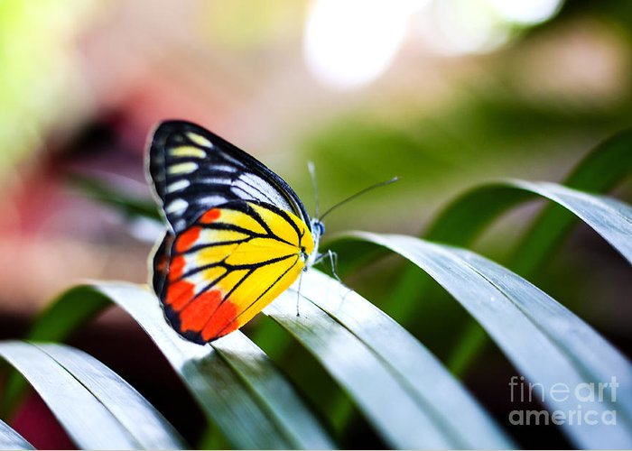 No Greeting Card featuring the photograph Colorful Butterfly Resting On The Palm by Rrrainbow