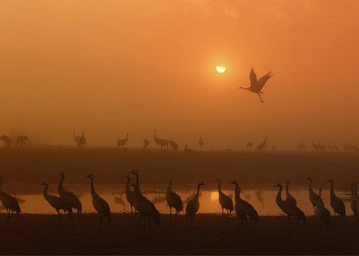 Designs Similar to Cranes At Sunrise by Keren Or