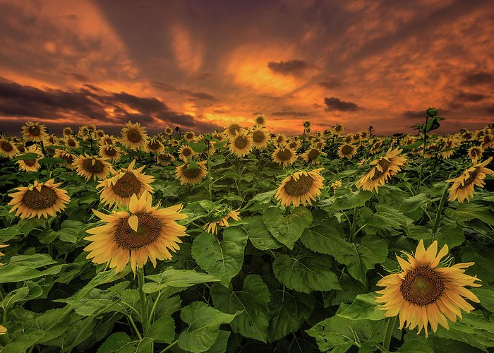 God Rays Greeting Card featuring the photograph Crepuscular Rays by Aaron J Groen