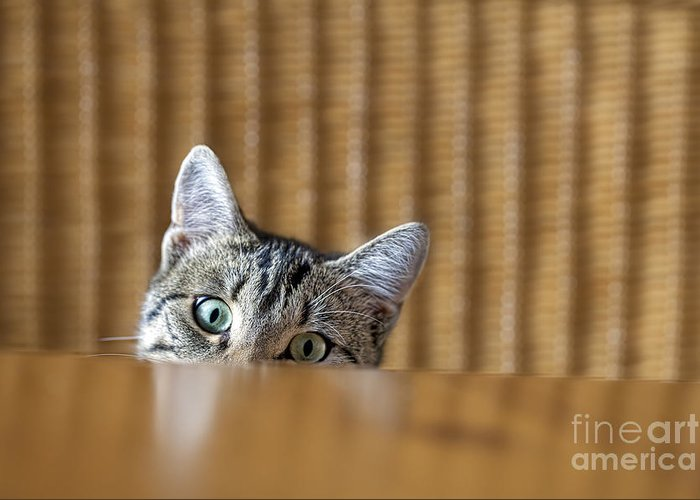 Fur Greeting Card featuring the photograph Curious Young Kitten Looking Over A by Dirk Ott