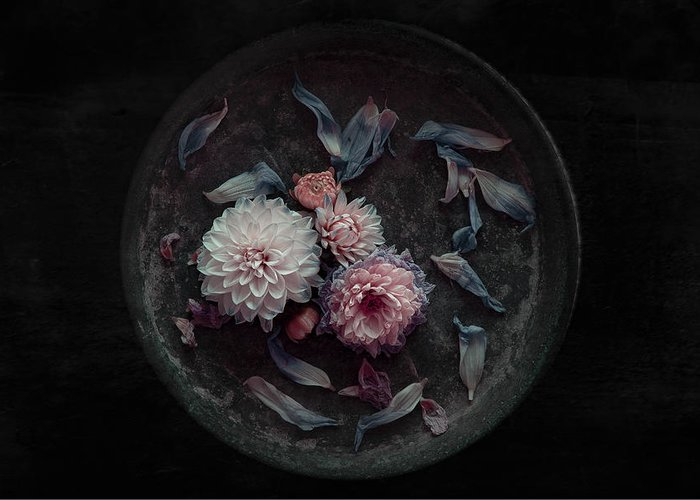 Flowers Greeting Card featuring the photograph Dahlia On Their Last by Inge Schuster