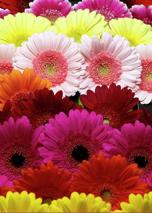 Large Group Of Objects Greeting Card featuring the photograph Daisies by Lumina Imaging