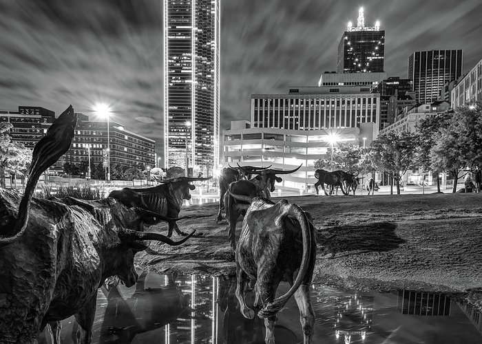 Dallas Skyline And Texas Longhorn Cattle Drive Sculptures Black And White Greeting Card For Sale By Gregory Ballos