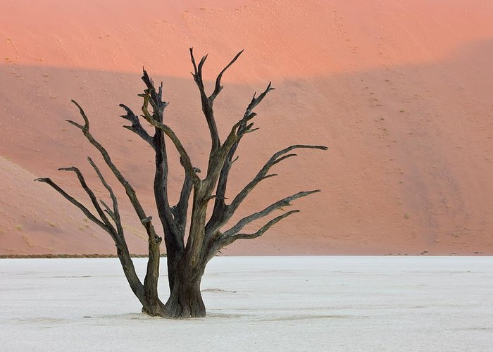 Scenics Greeting Card featuring the photograph Dead Vlei Sossusvlei Africa Namibia by Thorsten Milse / Robertharding