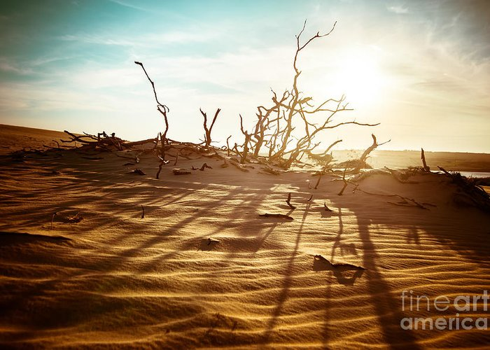 Arid Climate Greeting Cards