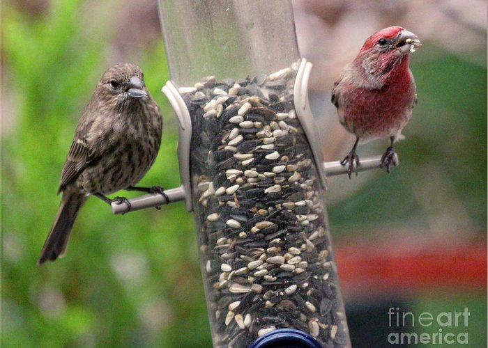 Female House Finch Greeting Card featuring the photograph Dinner for Two by Patricia Youngquist
