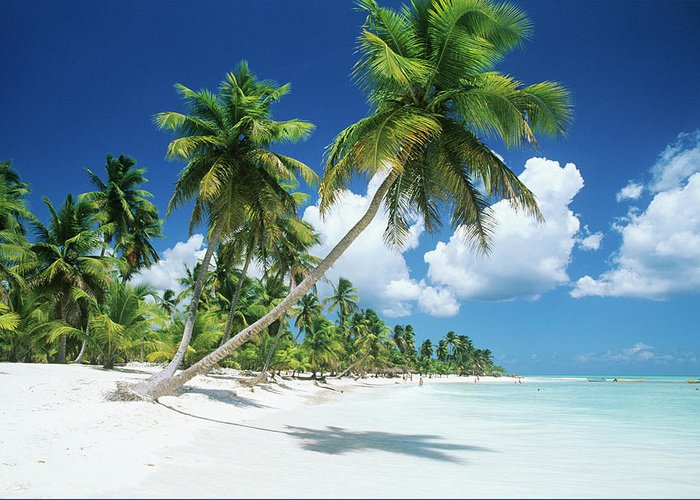 Scenics Greeting Card featuring the photograph Dominican Republic, Saona Island, Palm by Stefano Stefani