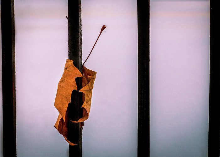 Leaf Greeting Card featuring the photograph Don't Let Go by Andriy Vintonyak