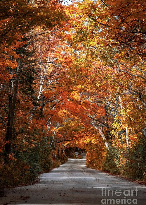 Door County Greeting Card featuring the photograph Door County Golden Path by Ever-Curious Photography
