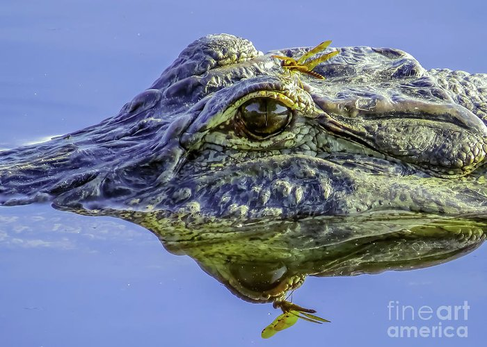 Alligator Greeting Card featuring the photograph Dragonfly On The Alligator Eye by Zina Stromberg