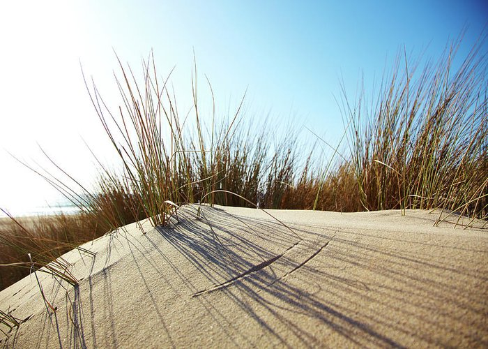 Tranquility Greeting Card featuring the photograph Dune Grass On A Sand Dune At The Beach by Thomas Northcut