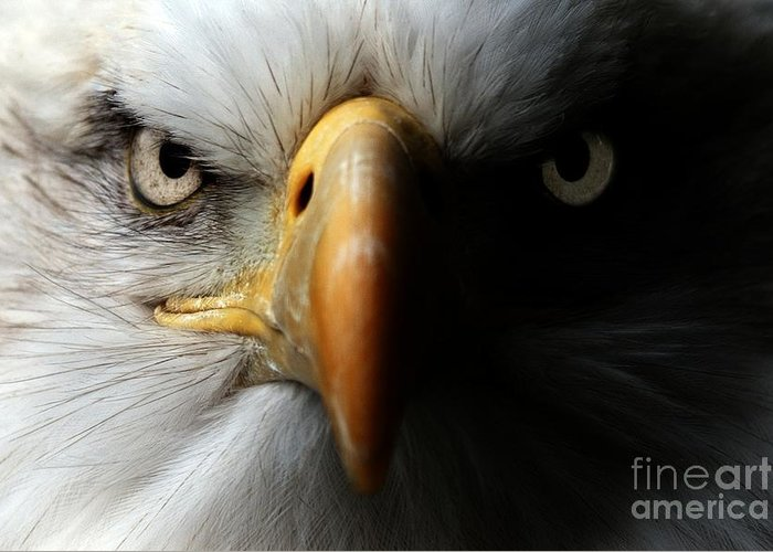 Feather Greeting Card featuring the photograph Eagle Close Up Portrait by Ismael Jorda