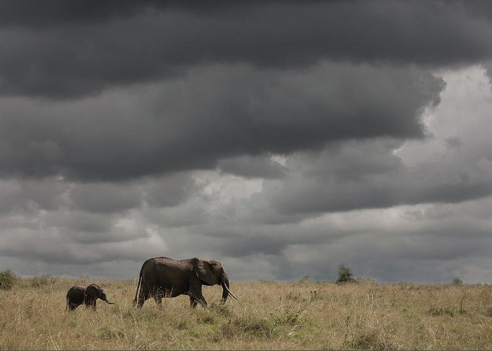 Kenya Greeting Card featuring the photograph Elephant Under Cloudy Sky by Buena Vista Images